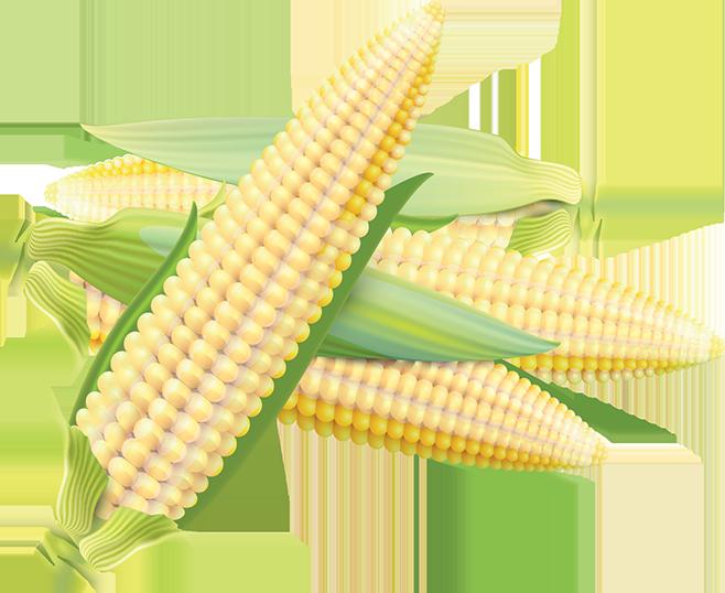 corn__Contact